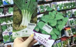 香港でベランダ菜園を始めるなら!